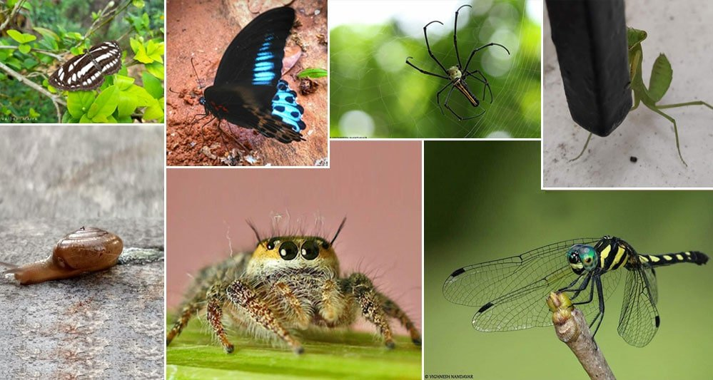 Meet the 'insect' engineers of BNMIT